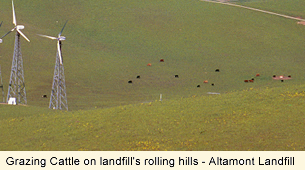 Grazing cattle on landfill's rolling hills - Altamont Landfill